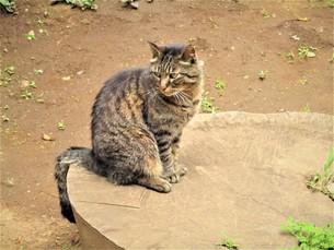 江の島の動物達の写真素材 [FYI01200633]