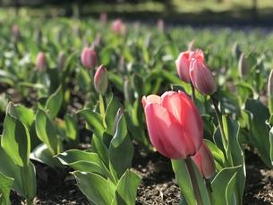 春の花の写真素材 [FYI01200644]