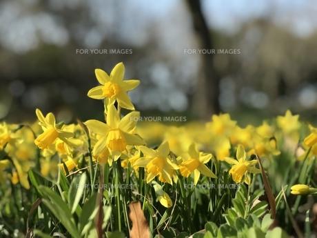 春の花の写真素材 [FYI01200645]