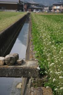 田舎の風景 水路の写真素材 [FYI01200663]