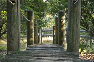 アスレチック 丸太道の写真素材 [FYI01200684]