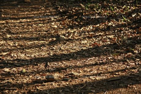 落ち葉の写真素材 [FYI01200706]