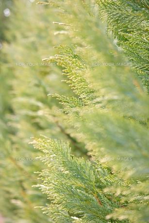 葉の写真素材 [FYI01200756]