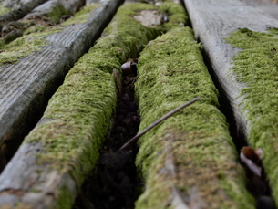 木と苔の写真素材 [FYI01200828]