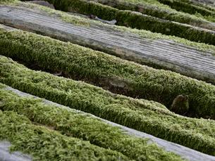 木と苔の写真素材 [FYI01200829]