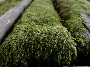 木と苔の写真素材 [FYI01200830]