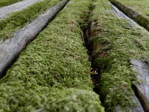 木と苔の写真素材 [FYI01200831]