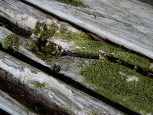 木と苔の写真素材 [FYI01200832]
