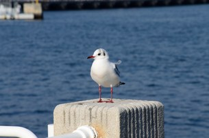 凛々しい鳥の写真素材 [FYI01200887]