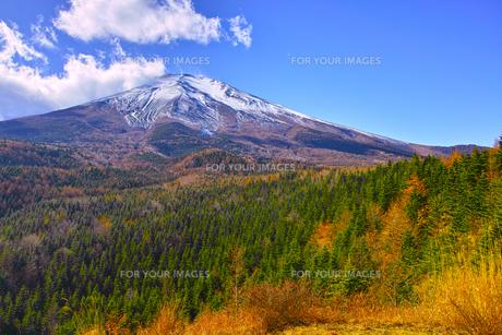 紅葉シーズンの富士山の写真素材 [FYI01200892]