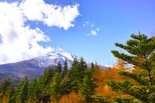 紅葉シーズンの富士山の写真素材 [FYI01200894]