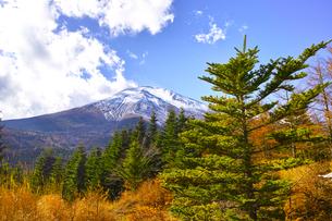 紅葉シーズンの富士山の写真素材 [FYI01200895]
