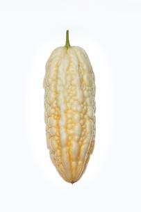 白いゴーヤ ニガウリの写真素材 [FYI01201047]