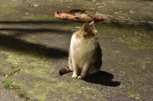 台湾の野良猫の写真素材 [FYI01201095]