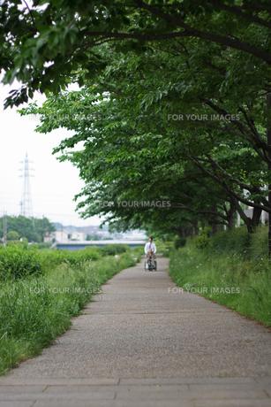 並木道の写真素材 [FYI01201556]