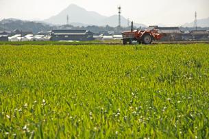 麦畑の写真素材 [FYI01201572]