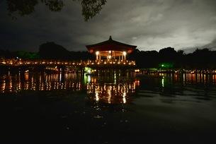 奈良の灯篭まつり,奈良燈花会(ならとうかえ)の写真素材 [FYI01201846]