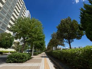 幕張の高層マンション街の写真素材 [FYI01202012]