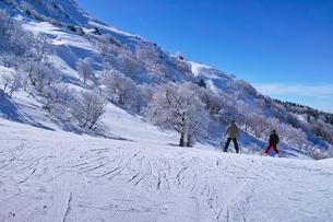 ゲレンデを滑走する前のスキーヤー達の写真素材 [FYI01202270]