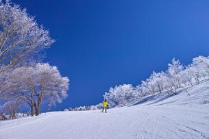 ゲレンデを滑走するスキーヤーの写真素材 [FYI01202275]