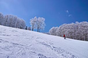 ゲレンデを滑走するスノーボーダーの写真素材 [FYI01202487]