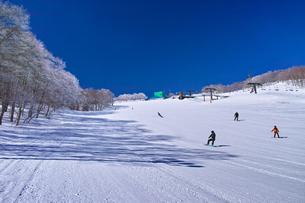 ゲレンデを滑走するスノーボーダーの写真素材 [FYI01202492]
