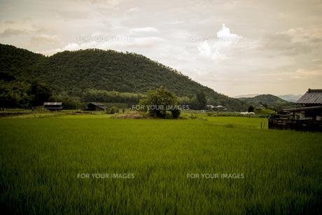 田舎の風景の写真素材 [FYI01202856]