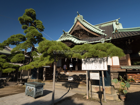 柴又帝釈天 題経寺の写真素材 [FYI01202952]