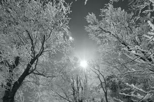 霧氷と太陽(白黒)の写真素材 [FYI01203113]