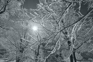 霧氷と太陽(白黒)の写真素材 [FYI01203114]