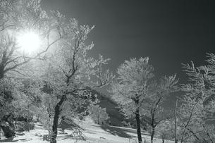 霧氷と太陽(白黒)の写真素材 [FYI01203115]