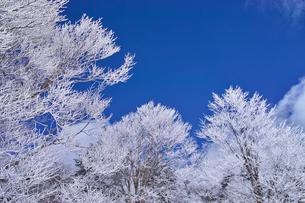 蔵王の霧氷の写真素材 [FYI01203116]