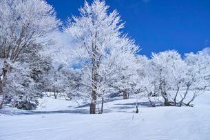 蔵王の霧氷の写真素材 [FYI01203119]