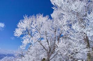 蔵王の霧氷の写真素材 [FYI01203120]