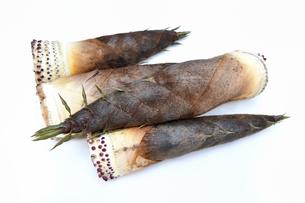 収穫したばかりの筍の写真素材 [FYI01203148]