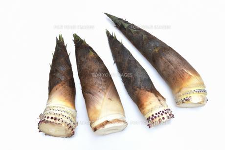 収穫したばかりの筍の写真素材 [FYI01203150]