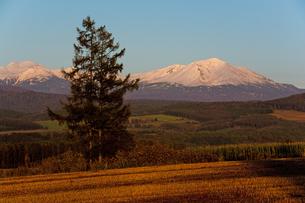 秋の夕暮れと冠雪の山 大雪山の写真素材 [FYI01203308]