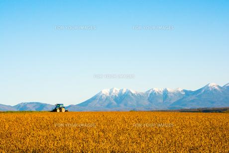秋の畑と冠雪の山並み 十勝岳連峰の写真素材 [FYI01203329]