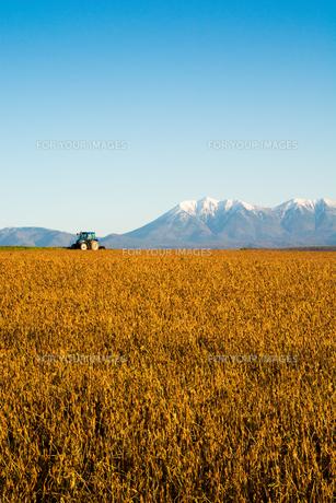 秋の畑と冠雪の山並み 十勝岳連峰の写真素材 [FYI01203330]