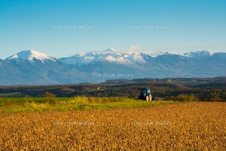 秋の畑と冠雪の山並み 十勝岳連峰の写真素材 [FYI01203331]