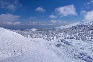 蔵王の樹氷原の写真素材 [FYI01203400]