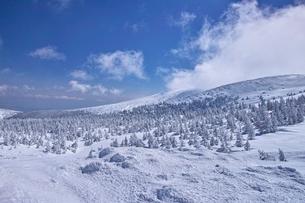 蔵王の樹氷原の写真素材 [FYI01203402]