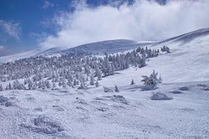 蔵王の樹氷原の写真素材 [FYI01203404]