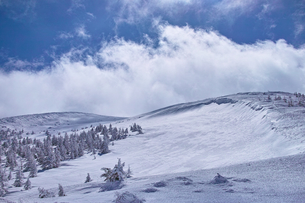 蔵王の樹氷原の写真素材 [FYI01203406]