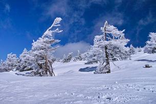 蔵王の樹氷の写真素材 [FYI01203408]