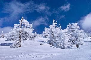 蔵王の樹氷の写真素材 [FYI01203409]