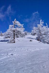 蔵王の樹氷の写真素材 [FYI01203411]