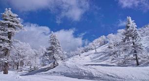 蔵王の樹氷の写真素材 [FYI01203412]