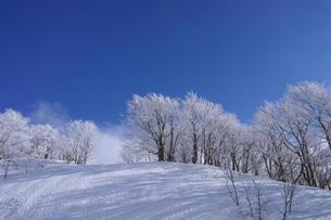 蔵王の霧氷の写真素材 [FYI01203413]