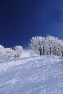 蔵王の霧氷の写真素材 [FYI01203414]